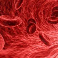 血液幹細胞のイメージ画像